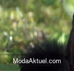 Sonsuz büyüleyici siyah sincaplarla tanışın