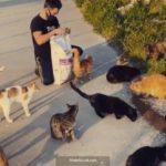 Yusuf Güney kedi besledi